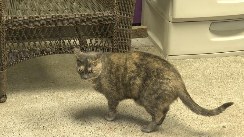 Roice-Hurst Humane Society will be hosting Caturday