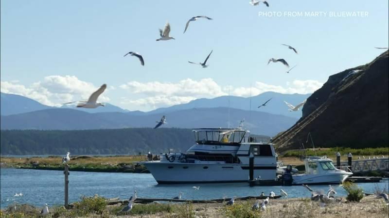 A wildfire threatens a 'crucial' bird habitat on a Washington island.