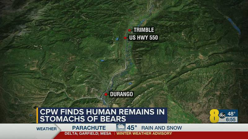 Human remains found in stomach of euthanized bears.
