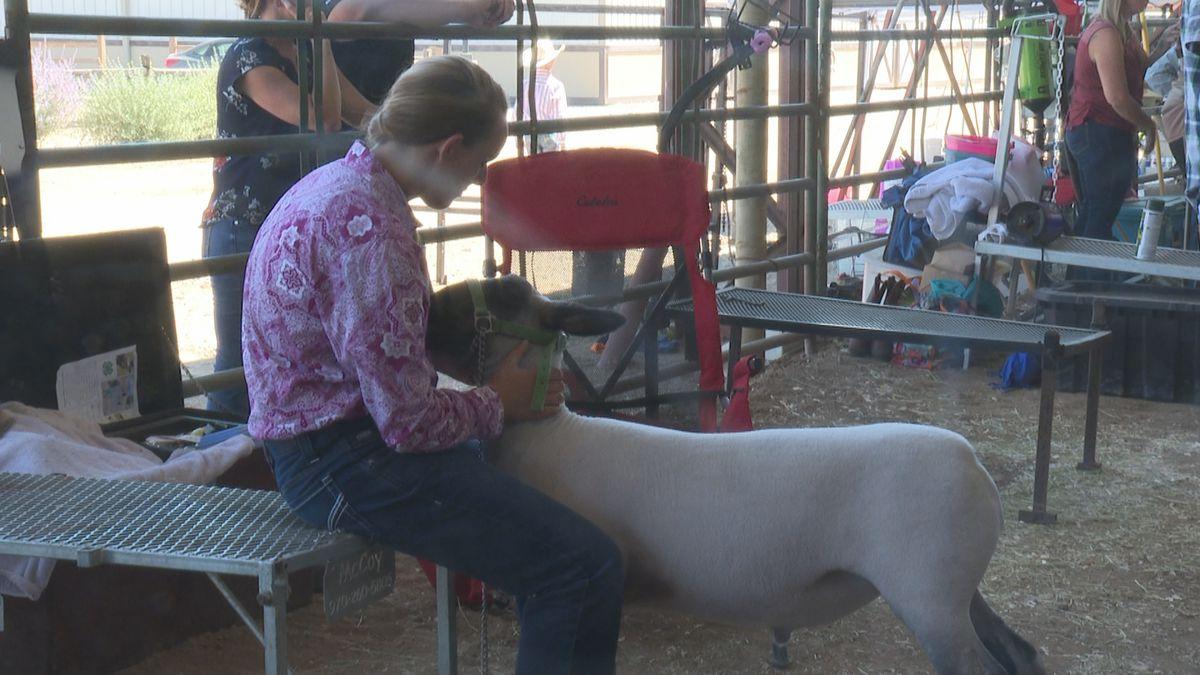 Juniors attend livestock auction