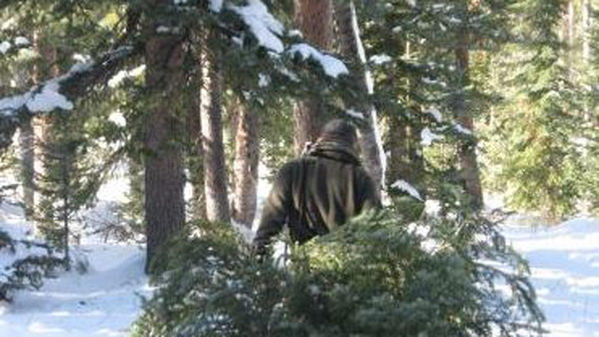 GMUG Online Christmas Tree Permits Coming Soon