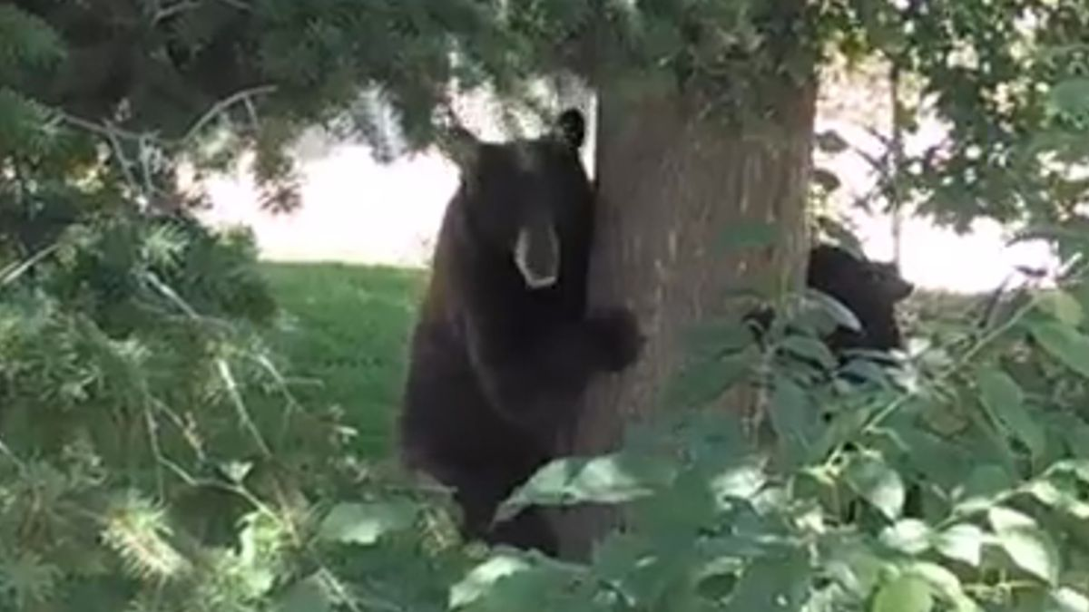 Colorado Parks and Wildlife says they've gotten several reports of bear activity lately, but it's not uncommon for this time of year.
