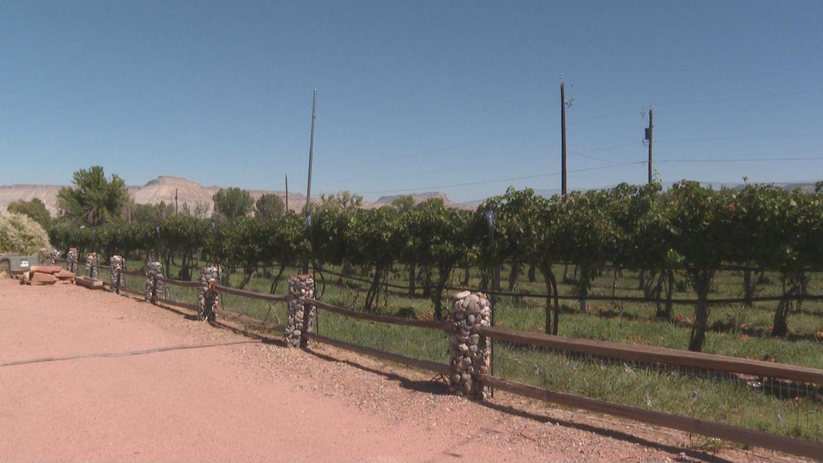 Grand Junction Wine Week 2020